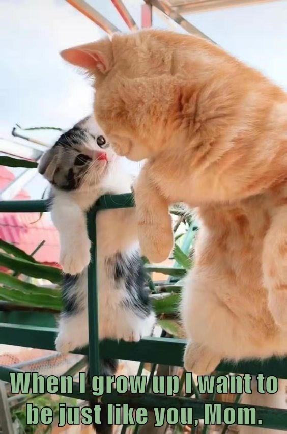 Cat - When1 growup Iwant to be just like you, Mom.