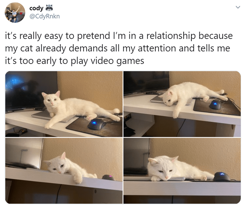 Cat - cody @CdyRnkn it's really easy to pretend l'm in a relationship because my cat already demands all my attention and tells me it's too early to play video games