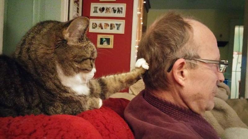 Cat - DAPDY