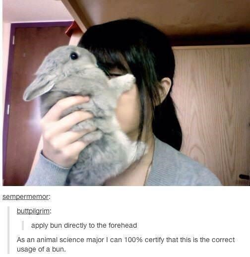 semoermemor buttpilgrim: apply bun directly to the forehead As an animal science major I can 100% certify that this is the correct tumblr post person holding a bunny to their face