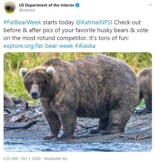 Vertebrate - US Department of the Interior @Interior #FatBearWeek starts today @KatmaiNPS! Check out before & after pics of your favorite husky bears & vote on the most rotund competitor. It's tons of fun: explore.org/fat-bear-week #Alaska 2:35 AM Oct 1, 2020 · Hootsuite Inc.