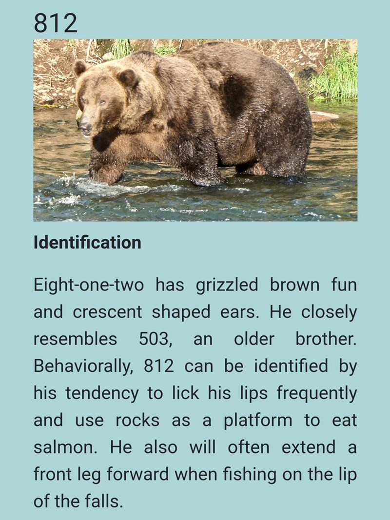 Brown bear - 812 Identification Eight-one-two has grizzled brown fun and crescent shaped ears. He closely resembles 503, an older brother. Behaviorally, 812 can be identified by his tendency to lick his lips frequently and use rocks as a platform to eat salmon. He also will often extend a front leg forward when fishing on the lip of the falls.