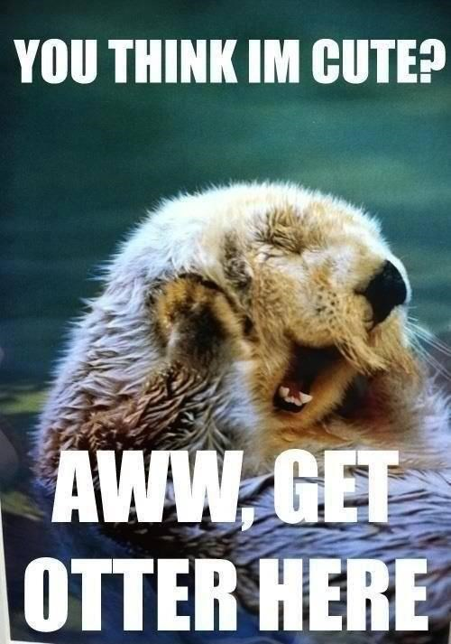 YOU THINK I'M CUTE? AWW GET OTTER HERE cute otter blushing embarrassed funny pun get out of here