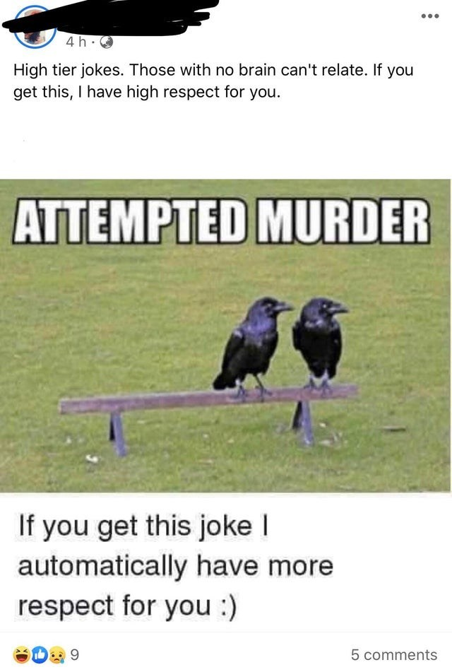 Bird - 4h.0 High tier jokes. Those with no brain can't relate. If you get this, I have high respect for you. ATTEMPTED MURDER If you get this joke I automatically have more respect for you :) 5 comments