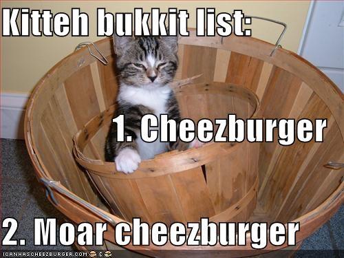 Cheezburger Image 955869952