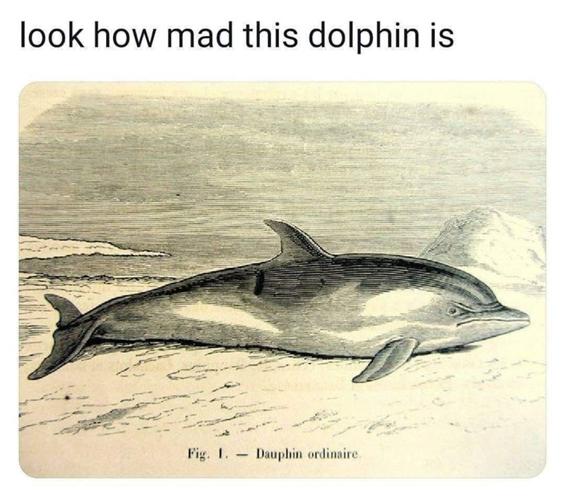 Bottlenose dolphin - look how mad this dolphin is Fig. 1. Dauphin ordinaire.