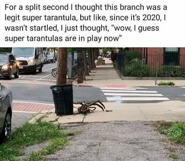 """Asphalt - For a split second I thought this branch was a legit super tarantula, but like, since it's 2020, I wasn't startled, I just thought, """"wow, I guess super tarantulas are in play now"""""""