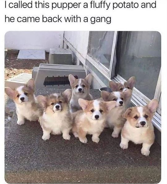 Dog - I alled this pupper a fluffy potato and he came back with a gang
