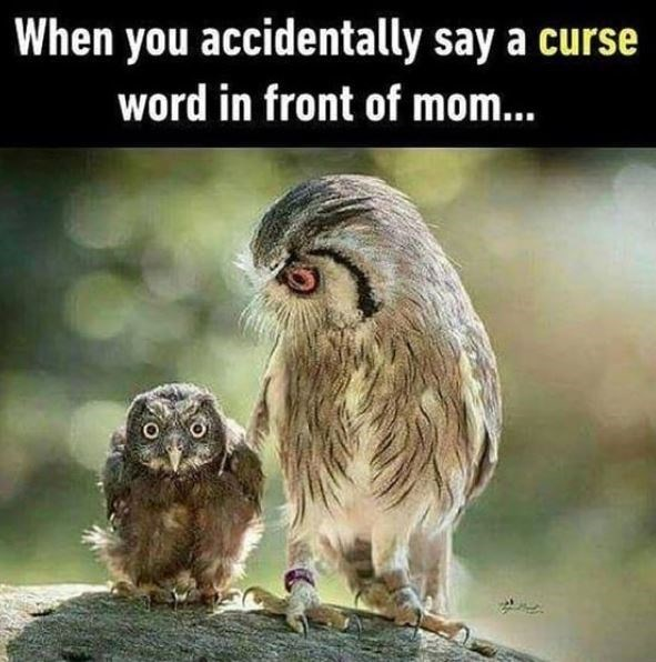 Owl - When you accidentally say a curse word in front of mom...