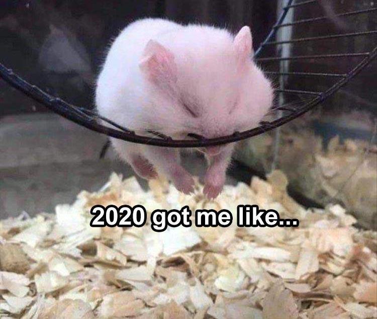 Rat - 2020 got me like.