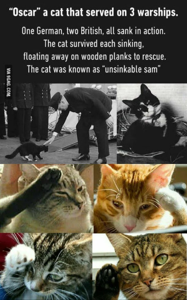 """Cat - """"Oscar"""" a cat that served on 3 warships. One German, two British, all sank in action. The cat survived each sinking, floating away on wooden planks to rescue. The cat was known as """"unsinkable sam"""" VIA 9GAG.COM"""