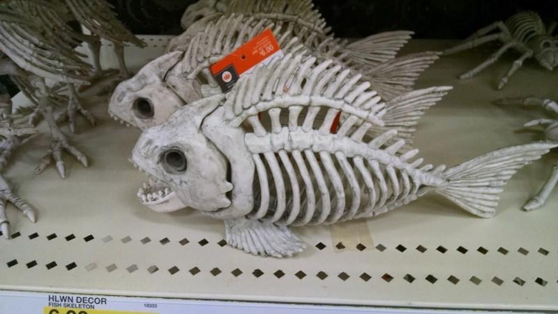 Fish - 6.00 HLWN DECOR FISH SKELETON 18333