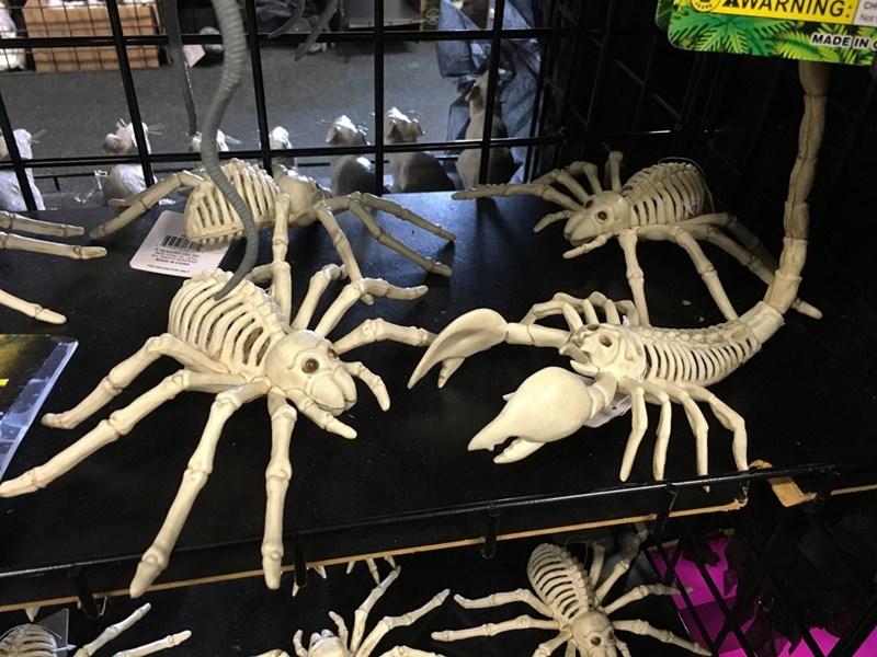 Skeleton - MADE IN C