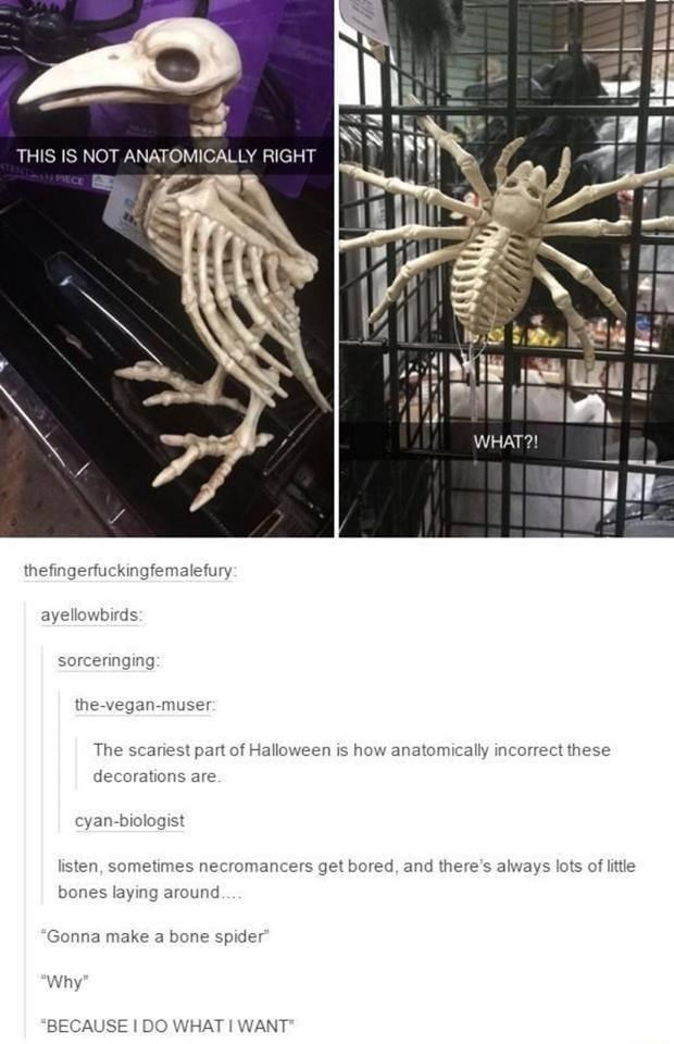 """Cage - THIS IS NOT ANATOMICALLY RIGHT PECE WHAT?! thefingerfuckingfemalefury: ayellowbirds: sorceringing: the-vegan-muser: The scariest part of Halloween is how anatomically incorrect these decorations are. cyan-biologist listen, sometimes necromancers get bored, and there's always lots of little bones laying around. """"Gonna make a bone spider"""" """"Why"""" """"BECAUSE I DO WHAT I WANT"""""""