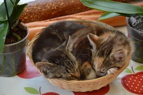 Cat - OMAL CARE