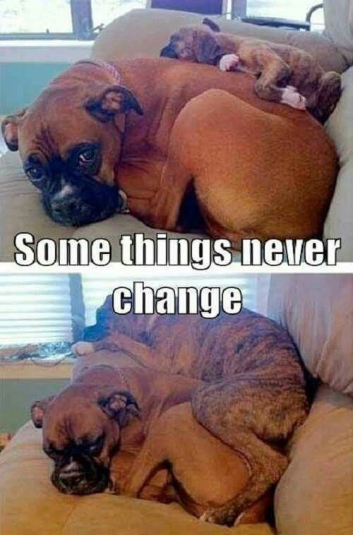 Dog - Some things never change