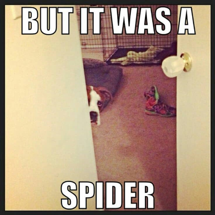 Photo caption - BUT IT WAS A SPIDER