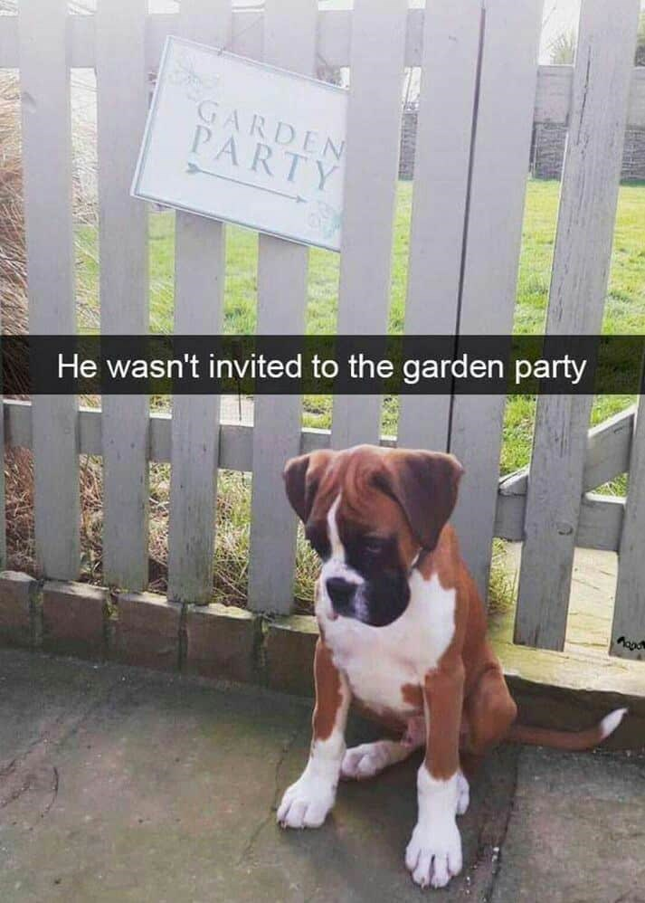 Dog - GARDEN PARTY He wasn't invited to the garden party