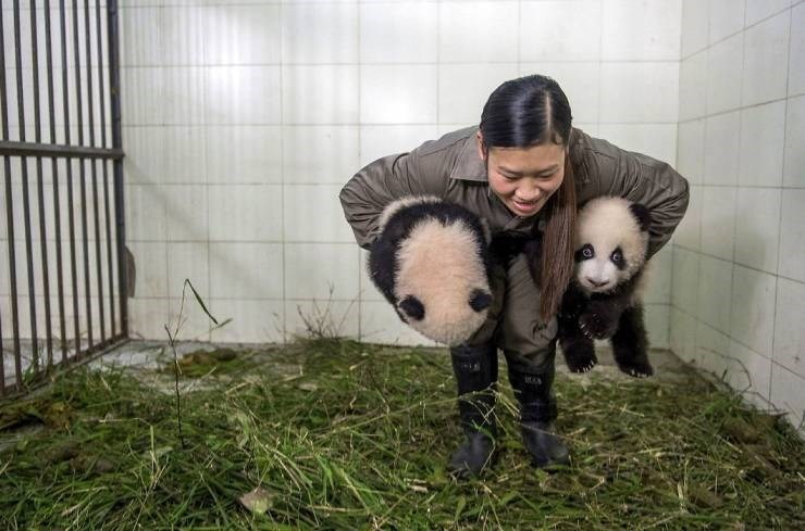 Panda - MAN