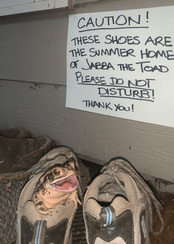 Text - CAUTION! THESE SHOES ARE THE SUMMER HOME Of JABBA THE TOAD PLEASE DO NOT DISTURB! THANK YOU!