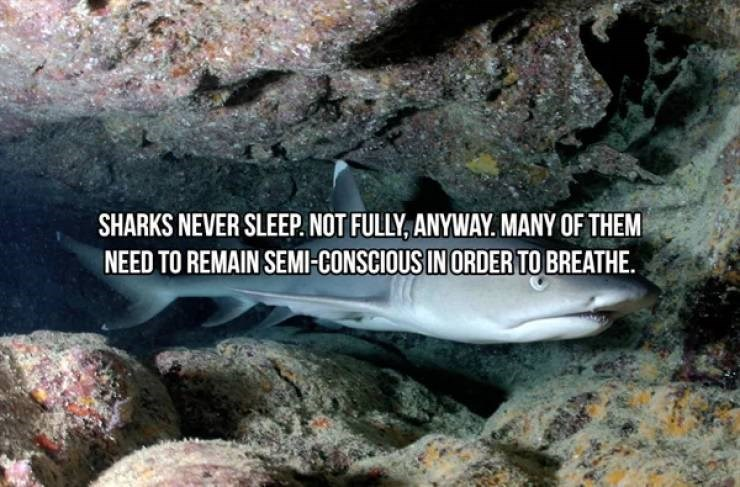 Fish - SHARKS NEVER SLEEP. NOT FULLY, ANYWAY. MANY OF THEM NEED TO REMAIN SEMI-CONSCIOUS IN ORDER TO BREATHE.
