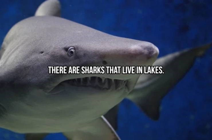 Fish - THERE ARE SHARKS THAT LIVE IN LAKES.