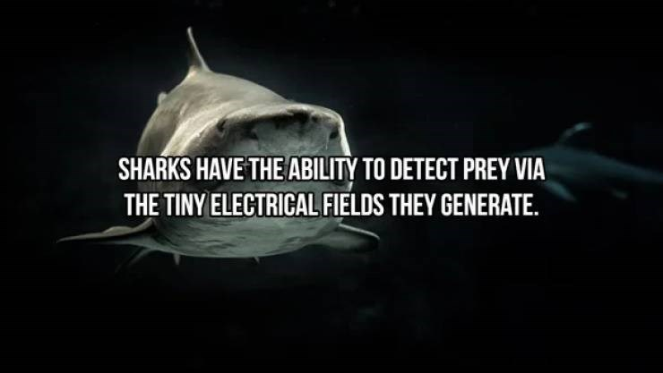 Fish - SHARKS HAVE THE ABILITY TO DETECT PREY VIA THE TINY ELECTRICAL FIELDS THEY GENERATE.