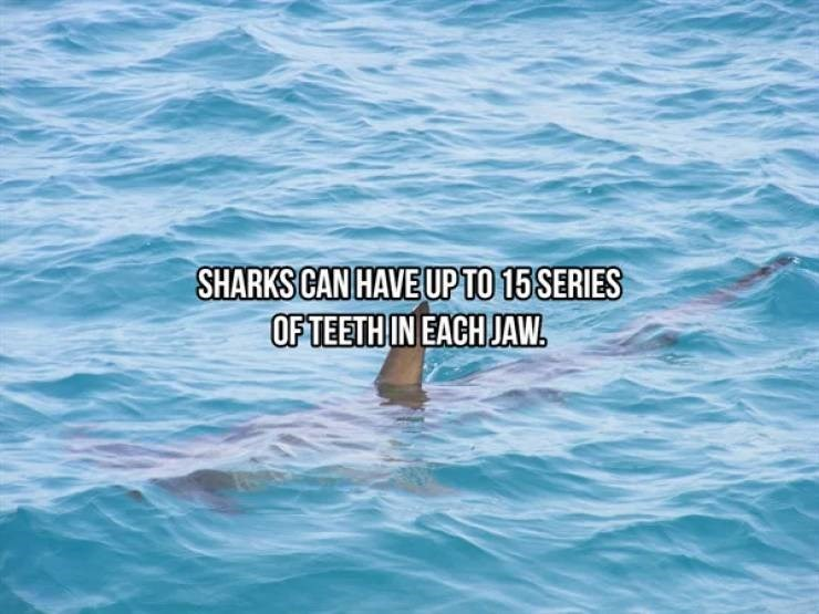 Water - SHARKS CAN HAVE UP TO 15 SERIES OF TEETH IN EACH JAW.