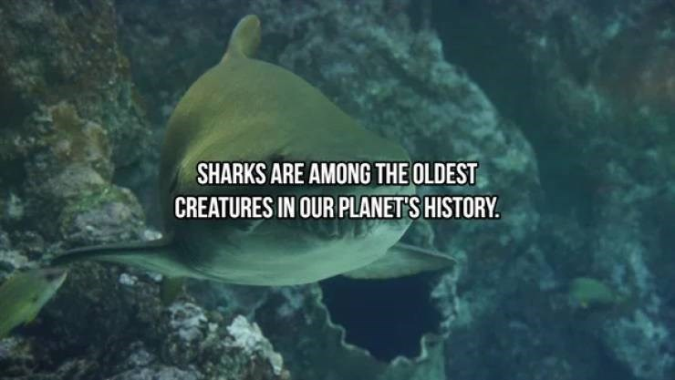 Marine biology - SHARKS ARE AMONG THE OLDEST CREATURES IN OUR PLANET'S HISTORY.