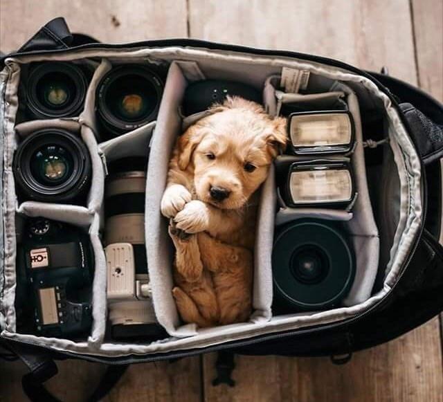 Dog - HO