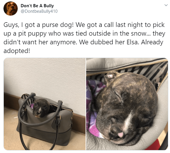 Canidae - Don't Be A Bully @DontbeaBully410 Guys, I got a purse dog! We got a call last night to pick up a pit puppy who was tied outside in the snow... they didn't want her anymore. We dubbed her Elsa. Already adopted!