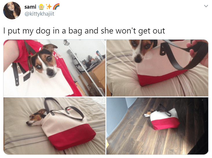 Product - sami @kittykhajiit I put my dog in a bag and she won't get out >