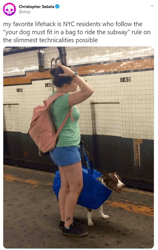 """Joint - Christopher Sebela @xtop my favorite lifehack is NYC residents who follow the """"your dog must fit in a bag to ride the subway"""" rule on the slimmest technicalities possible 145 145"""