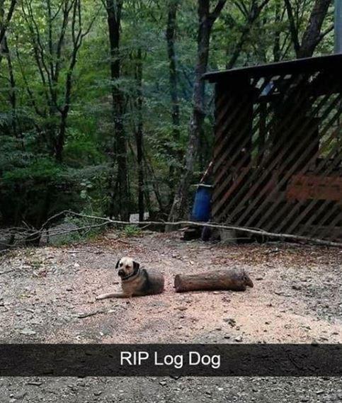 Nature - RIP Log Dog