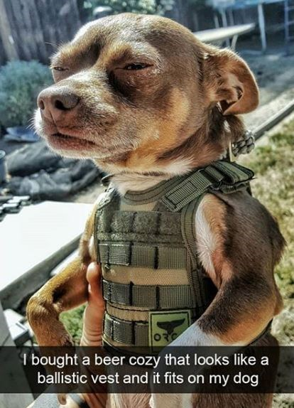 Photo caption - ORG I bought a beer cozy that looks like a ballistic vest and it fits on my dog