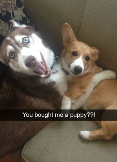 Dog - You bought me a puppy??!