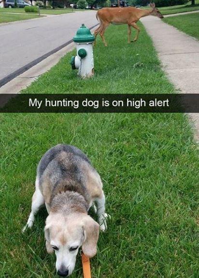 Dog - My hunting dog is on high alert