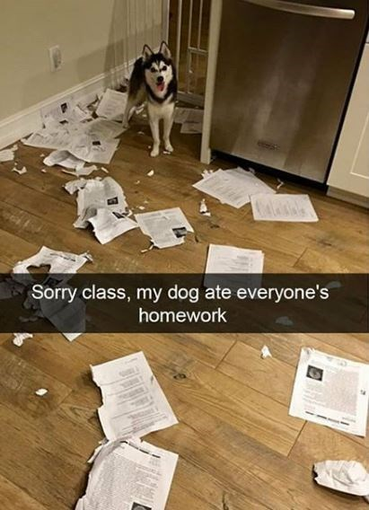 Floor - Sorry class, my dog ate everyone's homework