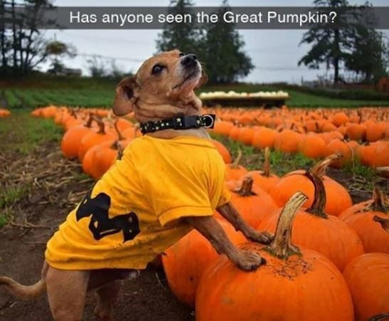 Pumpkin - Has anyone seen the Great Pumpkin?