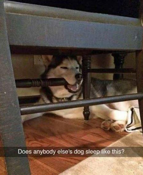 Dog - Does anybody else's dog sleep like this?