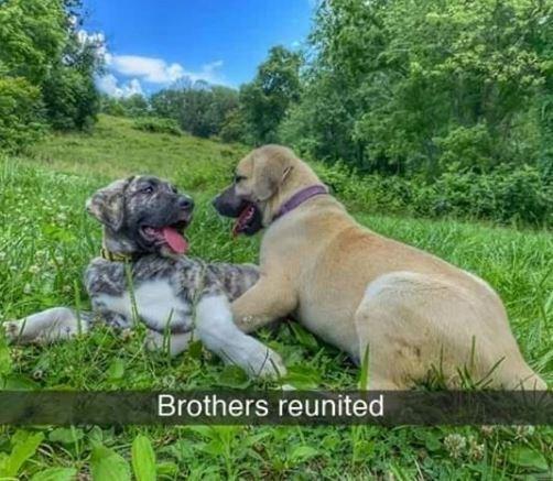 Dog - Brothers reunited