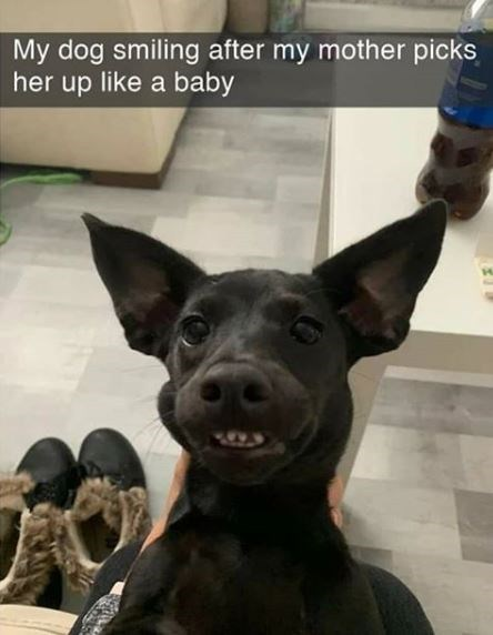 Dog - My dog smiling after my mother picks her up like a baby