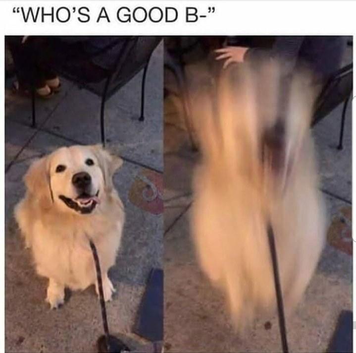 """Dog - """"WHO'S A GOOD B-"""""""