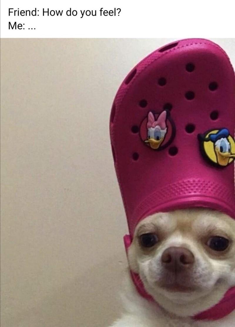 Dog - Friend: How do you feel? Mе: ...