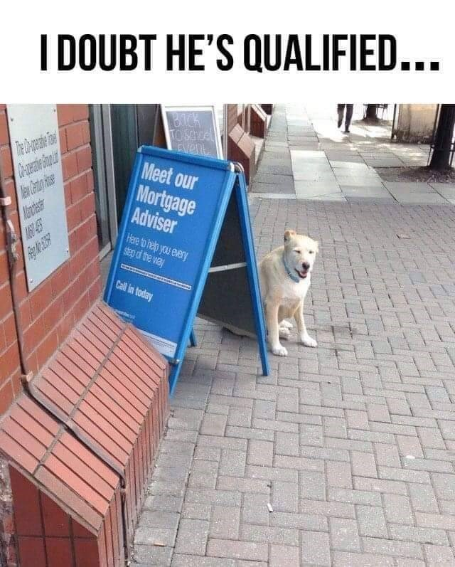 Canidae - I DOUBT HE'S QUALIFIED... BICk TO SChcel Meet our Mortgage Adviser Hare to help you every step d the way Call in today