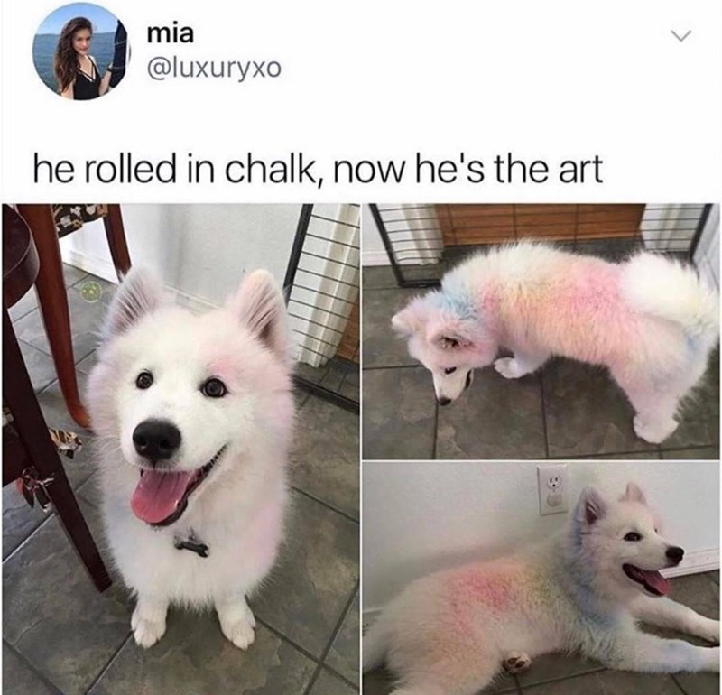 Dog - mia @luxuryxo he rolled in chalk, now he's the art
