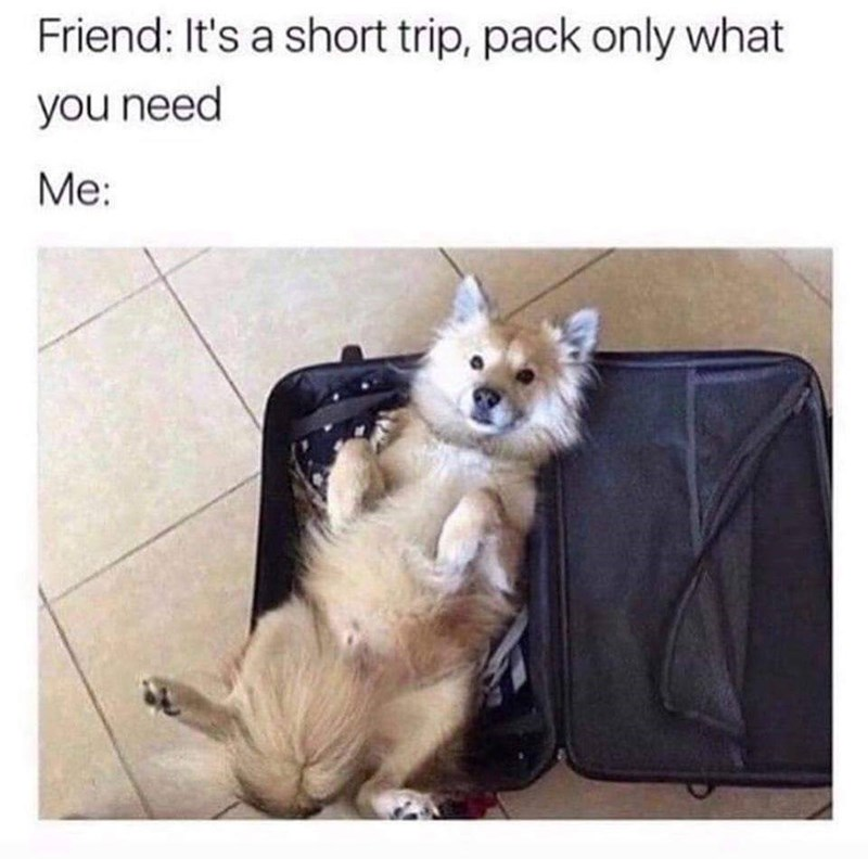 Pomeranian - Friend: It's a short trip, pack only what you need Me: