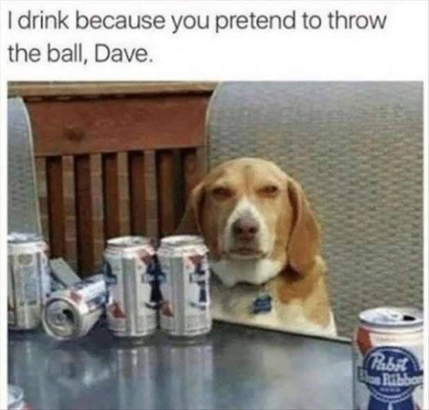 Dog - I drink because you pretend to throw the ball, Dave. Pabit Ribbor