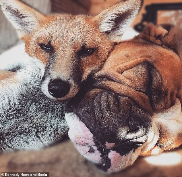Mammal - © Kennedy News and Media