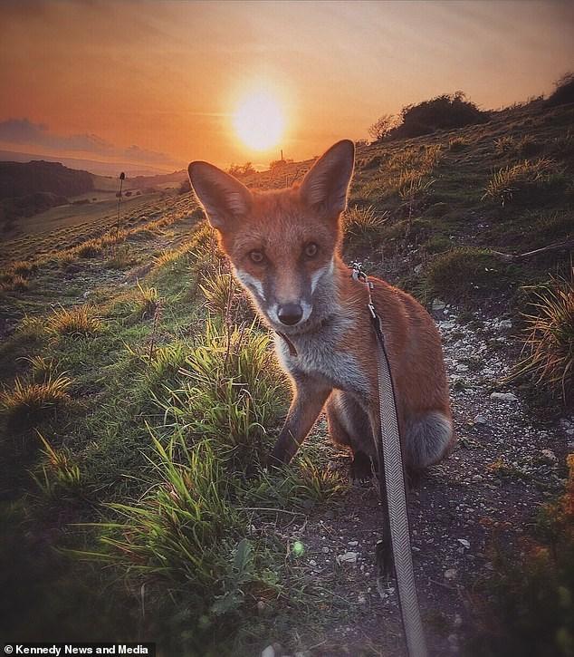 Wildlife - © Kennedy News and Media